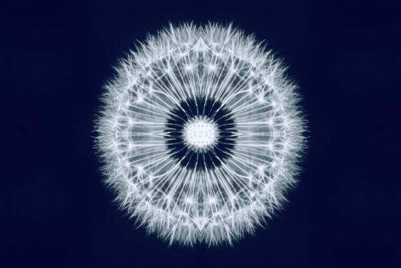 Проект Ю. Л., Богдановская И. М., Королева Н. Н. Развитие сетевых технологий как фактор трансформаций жизненного пространства современного человека